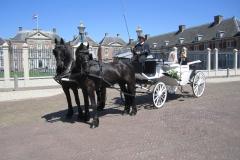 de_viervoeter_glaslandauer_met_friese_paarden_bij_paleis_het_loo