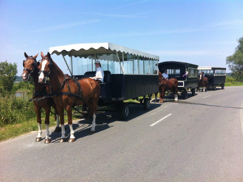 Met de paardentrams een mooie tocht maken